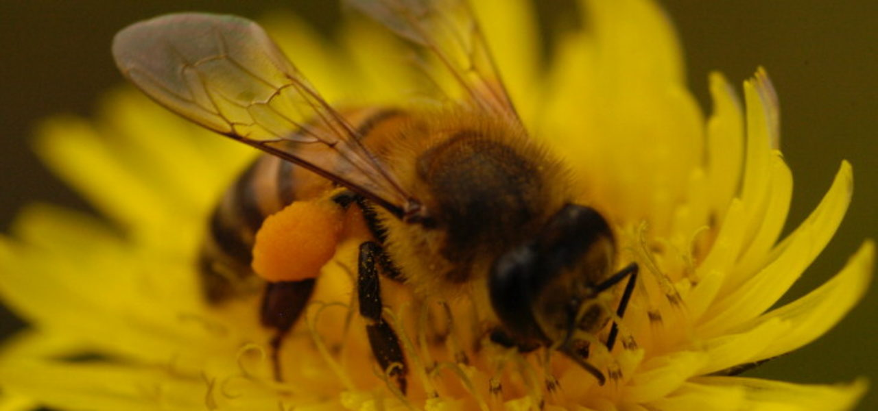 A research from Prof. Saraiva-PCS, published on Science journal,  shows that raising the pollinator count in small farms increases the agricultural production.
